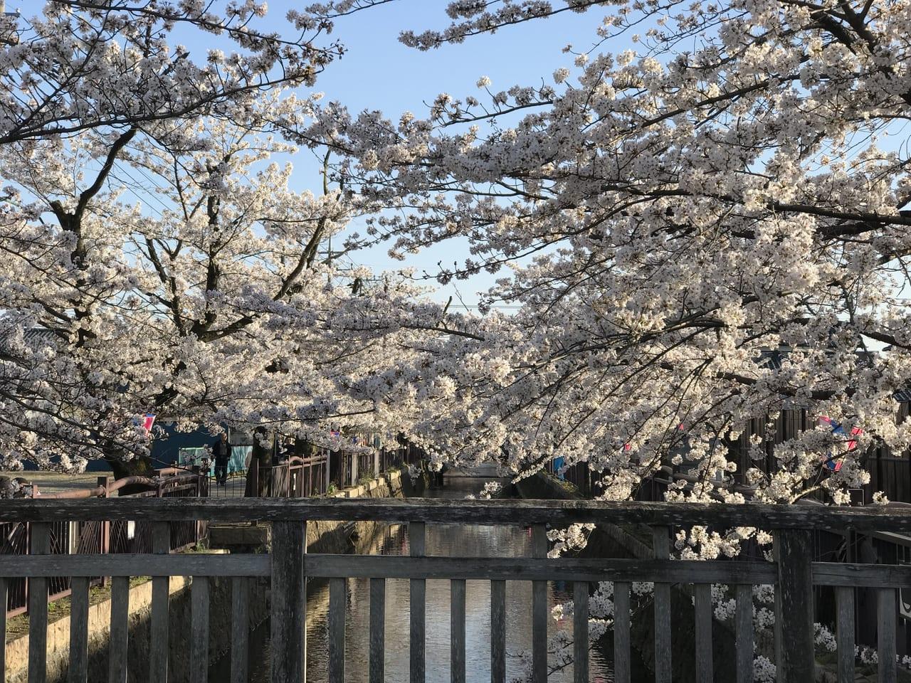 2020年八瀬川桜まつり中止